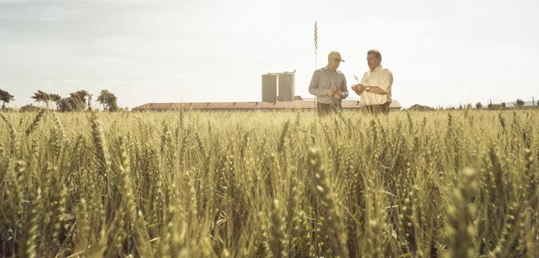 Getreide, Erber Group